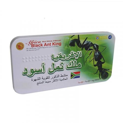 Africa Black Ant King, Африканский царь чёрных муравьёв